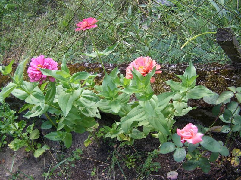 zahrádka je v květu