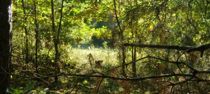 Podzim nachatě – fotočlánek